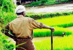 La globalizzazione sta annientando l'agricoltura mondiale
