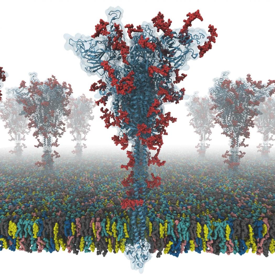 proteina spike